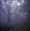 (✞bens▲n) Tags: hasselblad 500cm fujipro160ns 80mm f28 carl zeiss film analogue medium format 6x6 japan nagano karuizawa woods trees fog