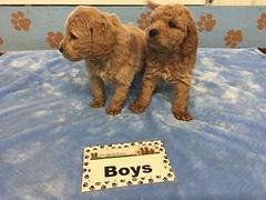 12-3 Roxie Boys_Pic 2