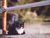 田代島 (かがみ~) Tags: tashirojima panasonic cat gx8 miyagi ishinomaki japan 425mmf17 neko ネコ 宮城 日本 猫 田代島 石巻 ishinomakishi miyagiken jp