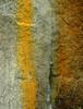 Bolehill Lichen Wall (CactusD) Tags: bolehillquarry bolehill quarry rock lichens colour derbyshire peak peakdistrict district landscape detail texture england greatbritain great britain nikon d800e fx uk unitedkingdom gb film 5x4 4x5 details fuji fujichrome velvia velvia50 largeformat large format digitized linhof technikardan tks45 s45 schneideraposymmarmc150mmf56 schneider 150mm f56 tilt shift tiltshift movements pce 85mmf28pce 85pce 85mm f28 homeprocessed tetenal e6 jobo cpe3