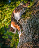Defying gravity (m3dborg) Tags: cat cats animal animals outdoor outdoors nature tree