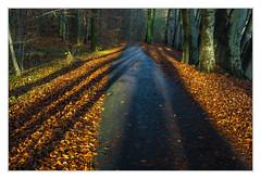 Time of the long shadows (bavare51) Tags: schattenwurf herbst radweg neubrandenburg buchenwald blätter landscape