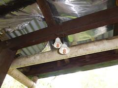 High Rise (tessab101) Tags: chimes bells spider spiders arachnid arthropods blue mountains nsw australia