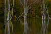 Olive Waters (SunnyDazzled) Tags: reflection reservoir water wanaque river bare dear white tree trunks forest newjersey longpondironworks statepark trees autumn greens olive