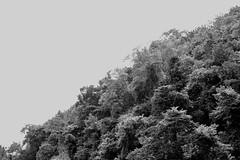 Belize Rainforest (.enKay) Tags: blackandwhitephotography jungle belize bw forest black white contrast centralamerica blackandwhite sky vacation travel travelling photography canon 60d angle rainforest trees vegetation