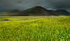 Summer in the Isle of Harris (Frédéric Lefebvre - Landscape photography) Tags: farming scotland isleofharris darksky cloudy uk tractor countryside moody yellow flowers yellowflower summer greysky newhebrides hebrides
