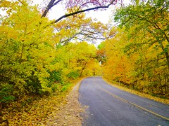 Colorful Autumn Fall Leaves in Madison, Wisconsin on a Cool October Afternoon (Seymour Lu) Tags: color autumn fall leaves madison wisconsin orange green yellow isolated road october tree leaf forest deciduous plants woods drive lane pavement nature panasonic lumix dmcg5 vario