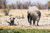 (ch.gunkel) Tags: africa afrika elefant elephant etoscha etosha namibia natur savanne tierwelt nature savanna wildlife