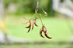Seed regeneration Popayan 12
