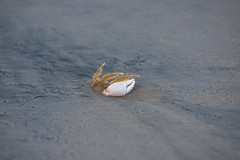 DSC_9758 (capt_tain Tom) Tags: crab water gulfofmexico death deadcrab