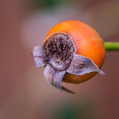 nature's way (Pejasar) Tags: seed autumn change transition nature garden orange orb fall tulsa oklahoma
