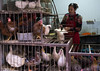 Woman selling live chickens and ducks in cages at a food market, Gansu province, Lanzhou, China (Eric Lafforgue) Tags: 3035years alive animal asia asian avian birdflu birdcage cage chicken chickens china china17842 chinese city colourimage dirty ducks h5n1 horizontal influenza lanzhou market marketstall oneadultonly onepersononly onewomanonly poultry sale seller selling street trade virus woman women worldtravel gansuprovince chn