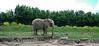 Parque Ukumari. (Juan Felipe Gómez T) Tags: elefante ukumarí pereira colombia linuxmint digikam fujifilmz90