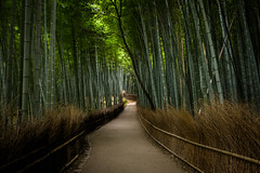 the path of bamboo, revisited #43 (Sagano, Kyoto) (Marser) Tags: xt10 fuji raw lightroom japan kyoto sagano bamboo bamboopath grove path green 京都 嵯峨野 竹林 竹林の小径