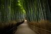 the path of bamboo, revisited #43 (Sagano, Kyoto) (Marser) Tags: xt10 fuji raw lightroom japan kyoto sagano bamboo bamboopath grove path green 京都 嵯峨野 竹林 竹林の小径