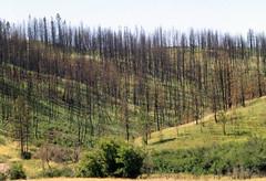 Fire17.tif (NRCS Montana) Tags: fire forestfire babydeanfire seeded