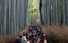 Arashiyama Bamboo Grove, Kyoto, Japan (maxunterwegs) Tags: arashiyama arashiyamabambooforest arashiyamabamboogrove bamboo bambou bambus bambú grove japan japon japão japón kyoto kyōto saganobambooforest tourism tourismus tourist turista 京都市 日本 kyōtoshi kyōtofu