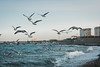 Seagull fly! (irinachobotova) Tags: seagull fly sea world water winter russia romantic nikon nature nikond5100 nice new nikond7100 national nationalgeographic novorossiysk animal beautyshoots beautiful bird birds city view wave cold travel trip