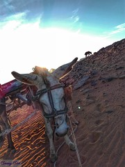 Hi you ! (amanyadel9212) Tags: blue sky white sand desert aswan nature stoeries land road rock egypt new temple travel light journey mobile photography colors photos macro cities dogs donkey animals