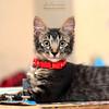 Yo! Whatsapp!! | Kitten (AnNamir™ c[_]) Tags: canon 5dmk3 5dmkiii annamir annamir2u kucing pencintakucing catlover cutekitten cutecats explore viral top whatsupp whatsapp wassap surprise
