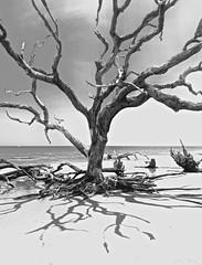 Georgia Coastal Tree with level Horizon !! (tvdflickr) Tags: jekyllislandgeorgia georgia usa coastal coast ocean atlantic beach tree shore shadow thomasdriggersphotography photobytomdriggers stark bare nikon d610 nikond610