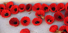 Afterwards... (SteveJM2009) Tags: knitwear poppies handicrafts crafted crocheted wool woollen cenotaph whitehall london remembrance rbl tributes uk november 2017 stevemaskell
