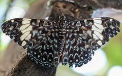 Butterfly close up (billcoo) Tags: fujifilm mcex11 nature bokeh macro explore