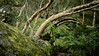 Camp Fire Creek (Bass Photography) Tags: campfirecreek glenbrook lapstone glenbrookgorge glenbrookcreek redhandscavewalk redhandscave jellybeanpool sydney penrith australia nsw bluemountains bluemountainsnationalpark
