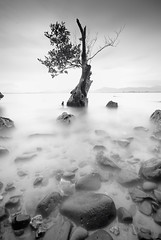 DSC_00111 (pattana92392) Tags: tree drytree branch water photography longexposure sea fineart seawave coast stone blackwhite