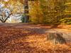 Virginia Water in Autumn-EB160323 (tony.rummery) Tags: autumn autumncolours em10 mft microfourthirds omd olympus path stump surrey virginiawater runnymededistrict england unitedkingdom gb