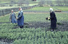 Forest nursery & women workers. Rauris (Mary Gillham Archive Project) Tags: 1965 52114 april1965 austria landscape people planttree rauris