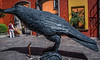 2017 - Mexico - Tequila - Jose Cuervo Raven (Ted's photos - For Me & You) Tags: 2017 cropped mexico nikon nikond750 nikonfx tedmcgrath tedsphotos tedsphotosmexico tequila vignetting tequilajalisco tequilapuebomágico santiagodetequila josecuervo josecuervotequila shadow sculpture bird bigbird colorful colourful handtruck wheels