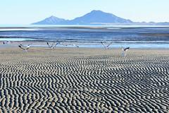 Desert of the sea (thomasgorman1) Tags: seagulls gulls nikon landscapes mountains nature view scenic desert ocean cortez mexico baja