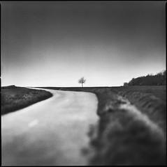 (Jib Peter) Tags: hasselblad flexbody kodaktx400 landscape lonelytree burgundy black white film analog photographieargentique 6x6 mediumformat winter bourgogne road