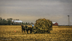 Last Load Of The Day (jackalope22) Tags: harvest amish farming boy corn wagon working horses