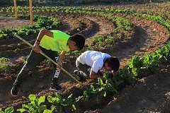 Innovador proyecto de permacultura urbana en barrio de Vallenar (Programa de Recuperación de Barrios - MINVU) Tags: qmb quieromibarrio ministeriodeviviendayurbanismo minvu vallenar permacultura