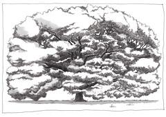 Switzerland, Geneva, summer tree (pirlouit72) Tags: suisse switzerland geneva geneve sketch drawing dessin croquis urbansketch urbansketcher urbansketchers carnetdevoyage tree arbre