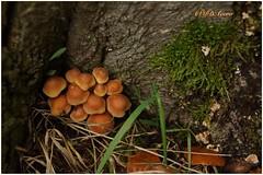 Armonía (mariadoloresacero) Tags: naturaleza nature sauvages champignons setas forêt bosque ilca68 sony