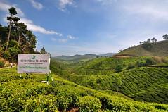India - Kerala - Munnar - Tea Plantagen - 220 (asienman) Tags: india kerala munnar teaplantagen asienmanphotography