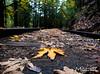 Trail (M.cLiu) Tags: trail leaf fall color change yellow green trip road season san jose california garden eden santa cruz