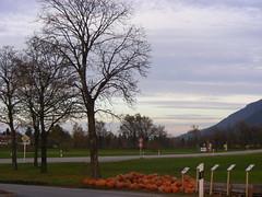 Halloween ;-) (megaroscio) Tags: albero panorama pumpkins zucche novembre halloween baviera dolcetto scherzetto sera fussen campagna natura verdura rurale
