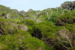 LHID 122 (newnumenor) Tags: australia lordhoweisland nsw