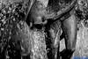 Lujuria del agua. Valencia, noviembre 2017. (Jazz Sandoval) Tags: 2017 elfumador españa exterior enlacalle agua blancoynegro búsquedas búsqueda blanco bn beautiful bw contraste calle curiosidad curiosity city ciudad digital day dìa fotografíadecalle fotodecalle fotografíacallejera fotosdecalle fuente escultura gotas white ilustración jazzsandoval luz light valencia monocromática monócromo movimiento moving bronce negro nero una onírico streetphotography streetphoto sombras sola ùnica water
