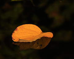 Floating (microwyred) Tags: forestwoods october events season nature leaf places beautyinnature orangecolor pond backgrounds plant autumn macro tree vibrantcolor forest closeup multicolored landscapes outdoors brown yellow colors greencolor smileonsaturday onesingleleaf
