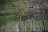 DSC_1996.jpg (Mike/Claire) Tags: impala 2016 southafrica tandatula timbavati