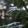 Snowy spruce (liisatuulia) Tags: porkkala talvi winter
