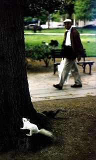One of Washington's famous albino squirrels! Franklin Square Park. May 1999.