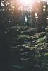Winter bush walks (Katie Tarpey) Tags: sun bush victoria australia fern light afternoonlight underexposed film trees agfa agfavistaplus400 nikonfm10 nikkor50mm14 exploring foraging grain grainy