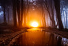 Sunrise (J C Mills Photography) Tags: portugal forest woodland trees fog long exposure light painting reflections sintra