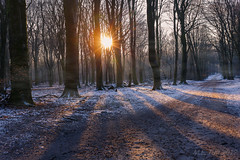 January snow @ Gelderland